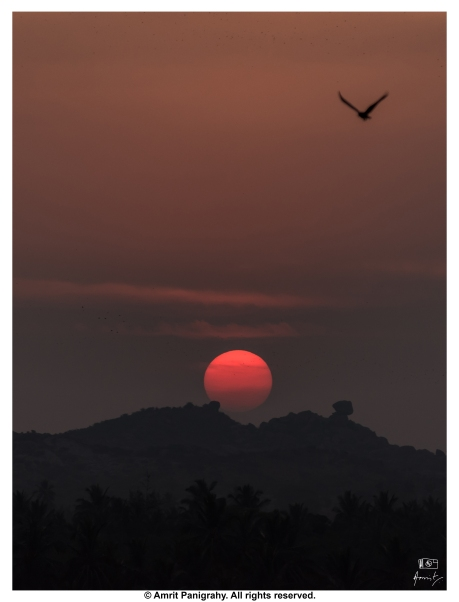 Sun and the hawk
